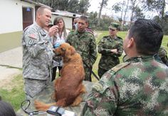 Army animals are all over the world! Last summer, U.S. Army South Soldiers traveled to Colombia and Honduras for subject matter expert exchanges (SMEEs). Pictured above, Lt. Col. Jerrod W. Killian, chief, clinical operations, command veterinarian for U.S. Army South, performed a physical exam on a Colombian military working dog with Colombian Army veterinarians.