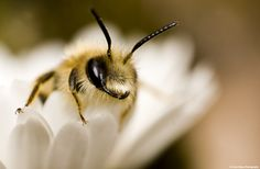 A smiling bee.