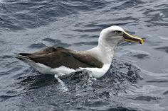 Jennifer Spry's Birding Blog: September 2013
