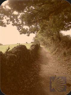 El Camino de Santiago, I will walk it someday.