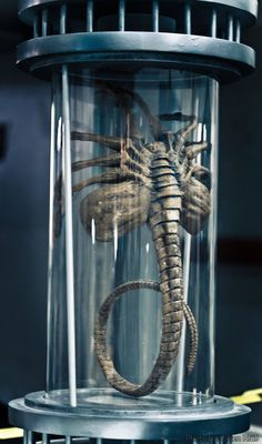 Facehugger. Once they're on the wearer is in a dreamlike state. They hardly ever come off.