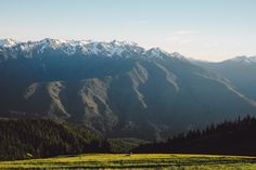 """""""As we wanted to chronicle the changes in landscape and nature, we went on hikes. Here's one of the higher places in Washington, Hurricane Ridge, with a big stag chilling in the evening light."""" 