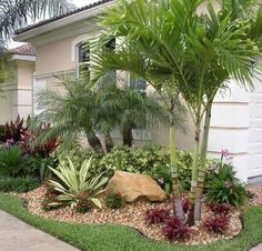 Front Yard Garden Design 17 Small Front Yard Landscaping Ideas To Define Your Curb Appeal Palm Trees Garden, Palm Trees Landscaping, Small Front Yard Landscaping, Florida Landscaping, Front Yard Design, Florida Gardening, Tropical Landscaping, Garden Landscaping, Landscaping Design