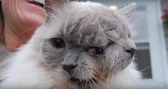A Look at the Rare and Unusual Cat With Two Faces #cats #diprosopus #twofaces