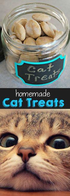 Easy to make #DIY Homemade Cat Treats recipe. #cats