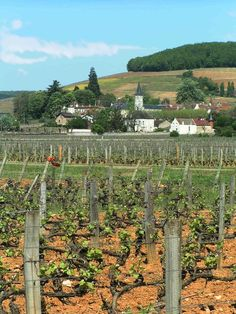 Aloxe-Corton | Burgundy