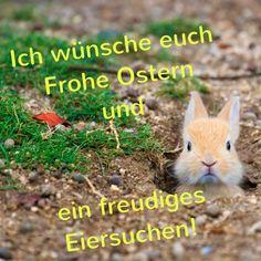 Die 70 Besten Bilder Von Ostern Bilder Rabbits Easter Bunny Und