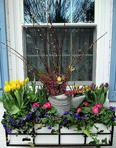 Welcome Spring! Time to change the window boxes!