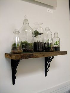 I need to repurpose some old lab glassware to make myself a nice terrarium.