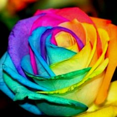 Tie dye roses - Use a white rose, split the stem up a few inches to create 4 stems. Place each stem in separate, undiluted food coloring containers (use different colors). Takes about 24 hours.
