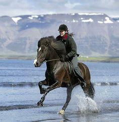 Icelandic Horse & rider gallop the shoreline