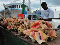 conch salad, fresh from the sea, made right in front of you (eleuthera) <3