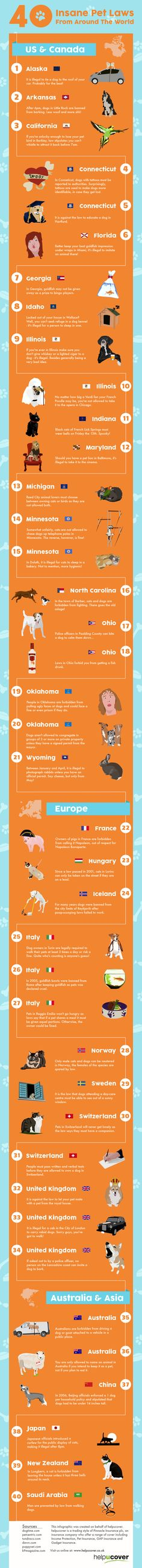 There are some pretty ridiculous laws in the world, but few can match these 40 strange pet laws from around the world, all compiled into a cool infographic. #infographic
