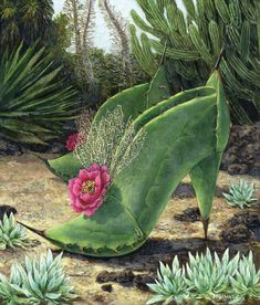 The Art of Carolyn Schmitz - Paintings of Cactus Shoes and Furniture Unusual Flowers, Beautiful Flowers, Garden Crafts, Garden Art, Costume Fleur, Cactus Pictures, Desert Art, Good Morning Flowers, Unique Plants