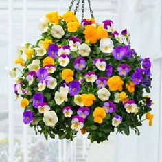 Learn about the Best Plants For Hanging Baskets. Hanging baskets filled with colorful flowers and plants are very showy and elegant and adorn any garden. Plants For Hanging Baskets, Hanging Flowers, Hanging Planters, Flower Seeds, Flower Pots, Colorful Flowers, Beautiful Flowers, Garden Web, Annual Plants