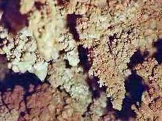 Grottes des Audides Parc préhistorique - YouTube
