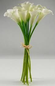 Image result for calla lily