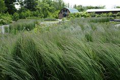 Tokachi Millenium Forest by Dan Pearson Studio in Hokkaido, Japan Garden Landscape Design, Landscape Architecture, Modern Landscaping, Garden Landscaping, Planting Grass, Garden Grass, Dan Pearson, My Secret Garden, Ornamental Grasses