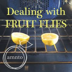 A Mum 'n the Oven: Ridding your Kitchen of Pesky Fruit Flies