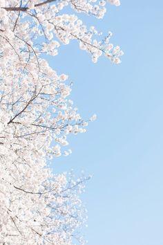 49 Ideas For Quotes Wallpaper Desktop Flower - Wallpaper Quotes Frühling Wallpaper, Blue Flower Wallpaper, Spring Wallpaper, Pastel Wallpaper, Tumblr Wallpaper, Blue Wallpapers, Aesthetic Iphone Wallpaper, Nature Wallpaper, Wallpaper Backgrounds
