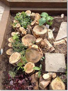 Garden Care, Garden Beds, Garden Plants, Permaculture Design, Fall Vegetables, Grow Organic, Woodland Garden, Edible Garden, Organic Gardening
