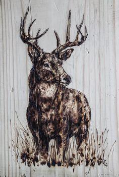 Pyrography (Wood Burning) White Tail Buck