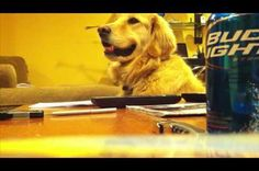 This Golden Retriever Loves the Acoustic Guitar. Watch as the playing stops the smile goes away. When the playing starts the dog gets happy. Love what music can do to all living things. Does this video make you smile? - See more at: http://www.findit.com/gzubidgmnsjocxu/RightNow/this-golden-retriever-loves-the-acoustic-guitar/b59239ea-276a-4c19-b167-1bd36c219120#sthash.2TN5ri7P.dpuf