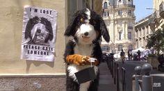 Rémi Gaillard Best Dogs, Tin, Animals, Animales, Animaux, Pewter, Animal, Animais
