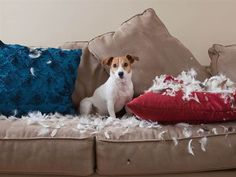 Tips to Stop Pets From Destroying Your Nice Stuff