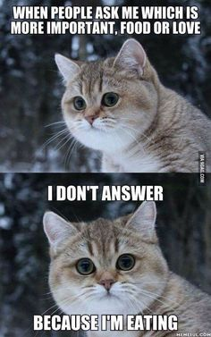 Fat cat meme - funny fat cat pictures with quotes Cute Cat Memes, Cute Animal Memes, Cute Funny Animals, Funny Cats, Fat Cat Pictures, Funny Animal Pictures, Memes Humor, Funny Memes, Dog Humor
