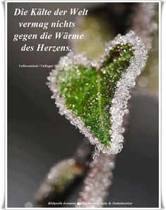 Hearts in Nature / Bokeh / Winter / frost-edged green leaf. I Love Heart, With All My Heart, Happy Heart, Lonely Heart, Heart Pics, Crazy Heart, Heart Pictures, Heart In Nature, Heart Art