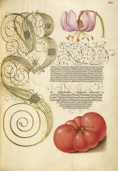 This Ivy House - design-is-fine: Joris Hoefnagel, illuminatior & Georg Bocskay, scribe, pages from Mira Calligraphiae monumenta, 1561/96. Via Getty Search