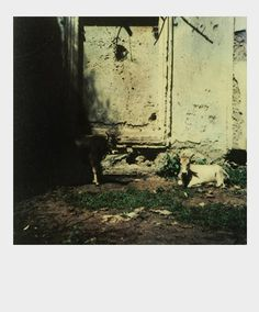 Tarkovsky Polaroid Photographs