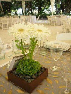Centro de mesa con gerberas blancas de Florería el Paraíso en Quinta Pavo Real del Rincón www.pavorealdelrincon.com.mx
