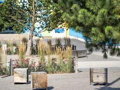 Prostor před školou v Petrovicích - Šmídová Landscape Architects