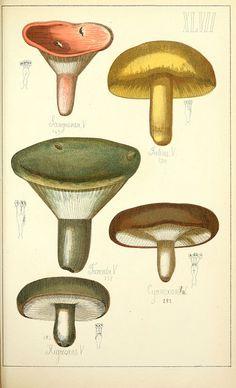 Histoire naturelle des champignons comestibles et vénéneux Paris :C. Delagrave,1883.