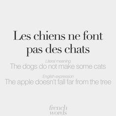 French Language Lessons, French Language Learning, French Lessons, English Lessons, French Tips, Foreign Language, Learning Spanish, English Sentences, English Words