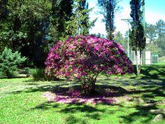Jardins do Clube Sogipa / Porto Alegre / RS / 2010