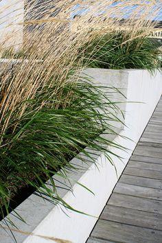 På Havnepromenaden i Aalborg pryder betonplantekummerne miljøet og giver grønt liv med kummernes græsarter. Aalborg, Liv, Aarhus, Herbs, Outdoor, Patio, Outdoors, Herb, Outdoor Games
