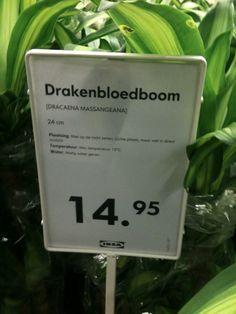 Ikea   Prijsaanduiding en productinformatie plant