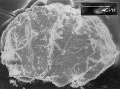 Clearcreekite, Hg+3(CO3)(OH)•2(H2O), Clear Creek claim (Clear Creek Mine), Picacho Peak, New Idria District, Diablo Range, San Benito Co., California, USA