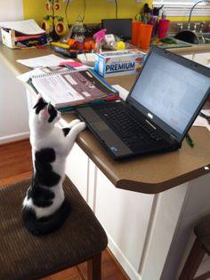 Zinnia at the laptop