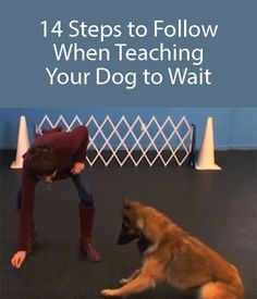 Teach your dog to wait. One of the most basic things your dog should learn. #DogObedience #DogWait
