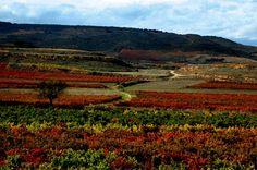 Atardecer entre viñedos. #winelovers