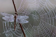 Let your intuition be your guide ... beware the seduction  https://pixabay.com/en/dragonfly-dew-spider-web-morning-1729157/