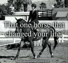 Riding a horse is better therapy than telling your psychiatrist how it made you feel when your mother washed your mouth out with soap as a child for repeating a curse word you'd heard her say the day before even though you didn't know what it meant and only said it in the first place because she said it and you wanted to be just like her.