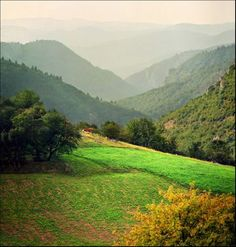 Infinite green layers