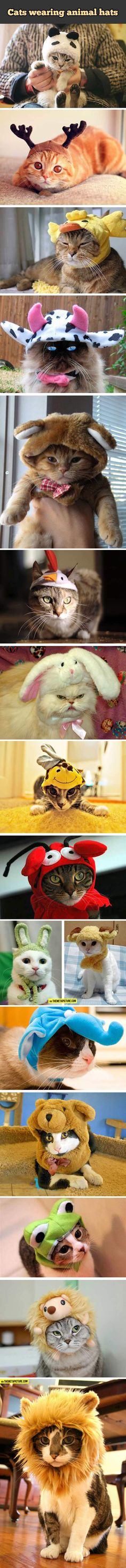 Cats wearing animal hats…this is what you should NOT do to your cats. It is wrong. Cats are dignified animals. but ..aww..looky how cute they are with the widdle hats on the fuzzy widdle heads.