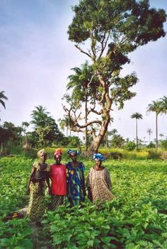 A REGULAR SCOOP OF NEWS RELATING TO THE INVALUABLE CONTRIBUTION OF AFRICAN WOMEN FARMERS TO FOOD SECURITY. THE NEWS LINKS WITH THE ENVIRONMENT TIMES' LONG TERM PROJECT TO GIVE FINANCIAL HELP TO THE NATIONAL WOMEN FARMERS' ASSOCIATION OF THE GAMBIA, WEST AFRICA