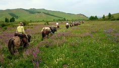Travel Goal: Horse Riding Trek in Mongolia